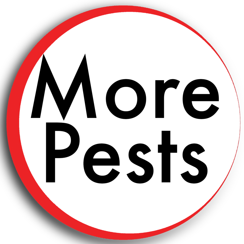 more pests.png