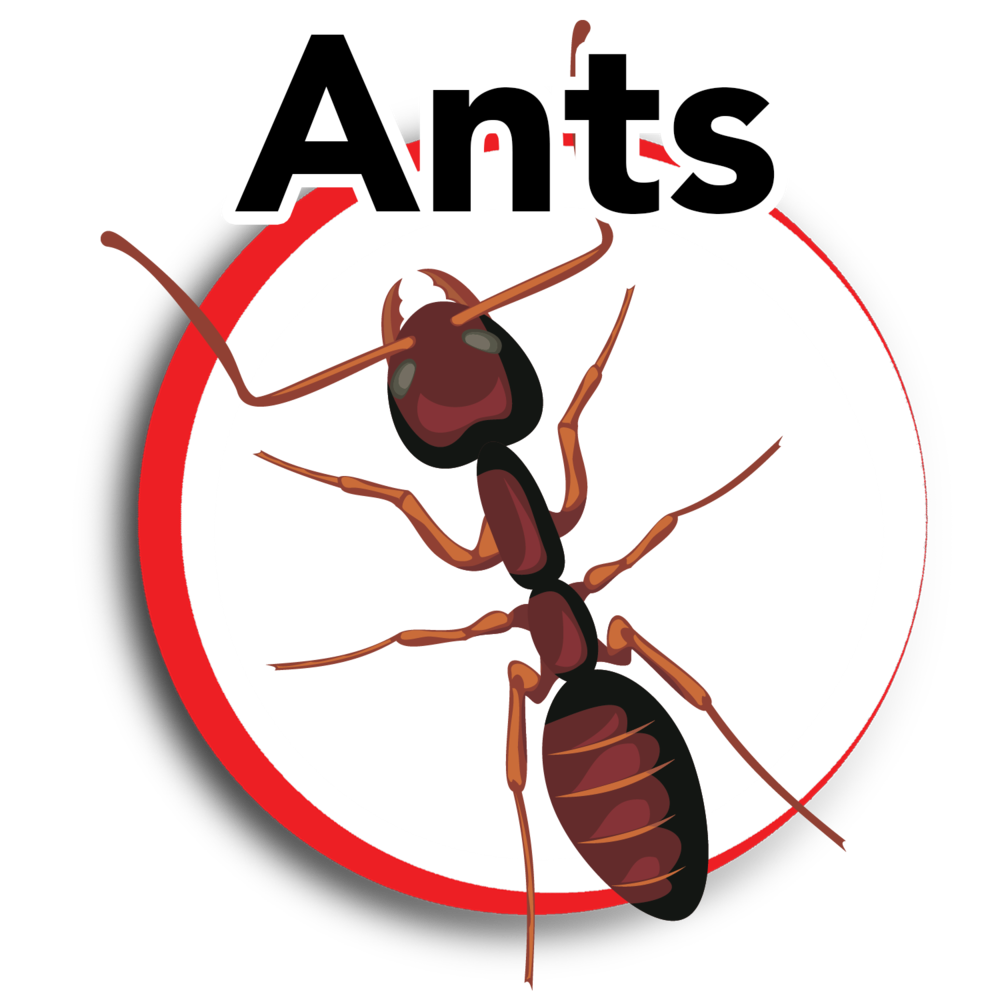 ants 1.png
