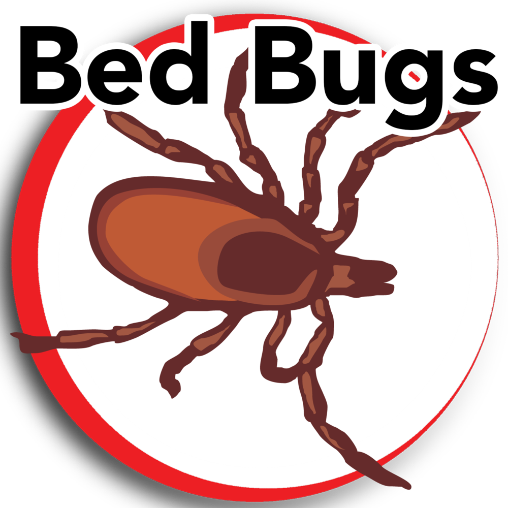 bed bugs update.png