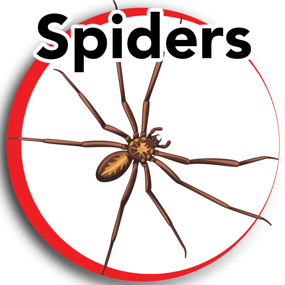 spiders update 2.png