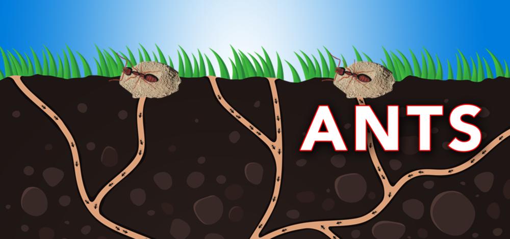 Ants banner (2).jpg