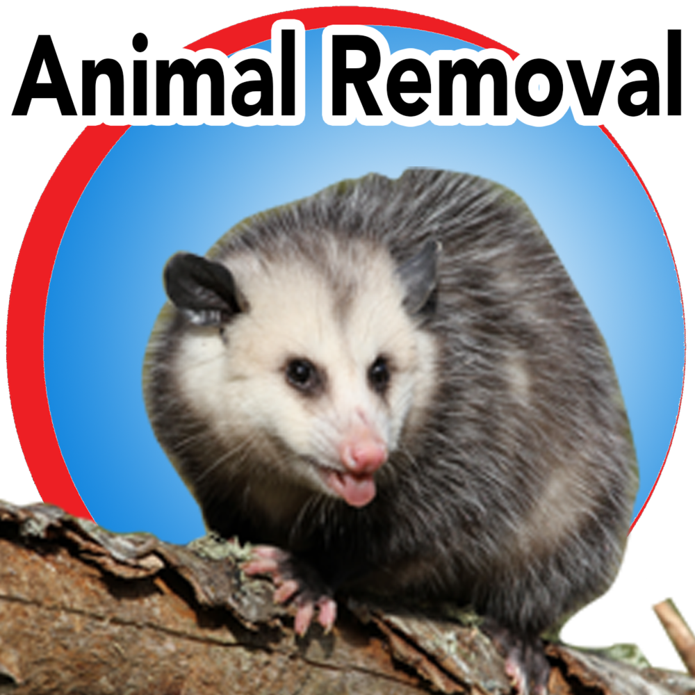 animal removal blue button.png