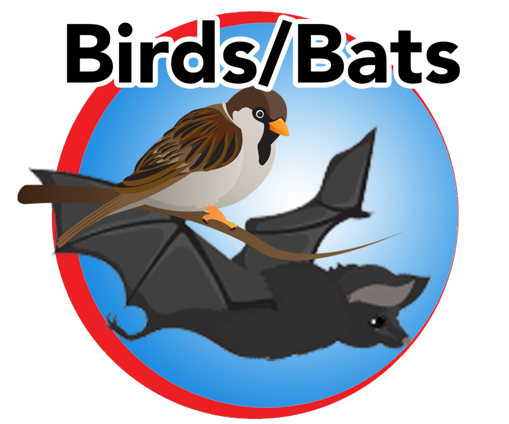 birds bats blue button.png