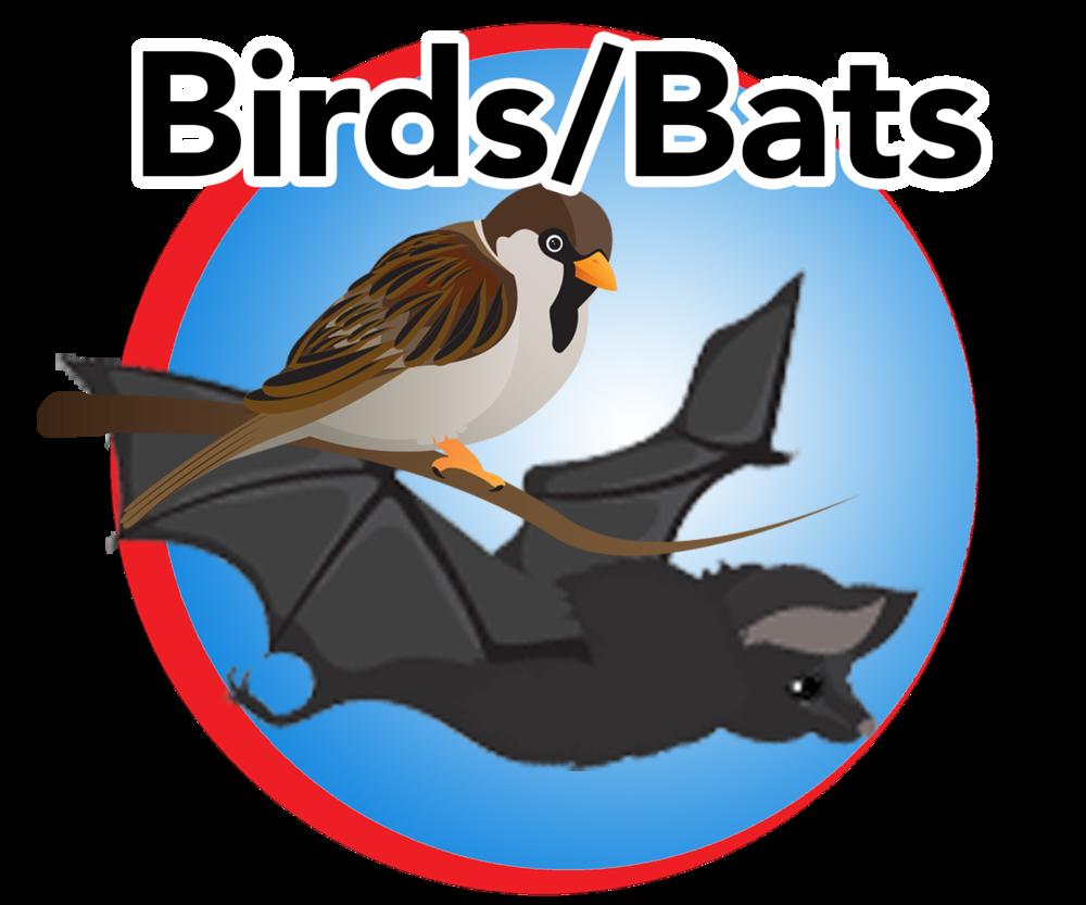 birds bats blue button.png