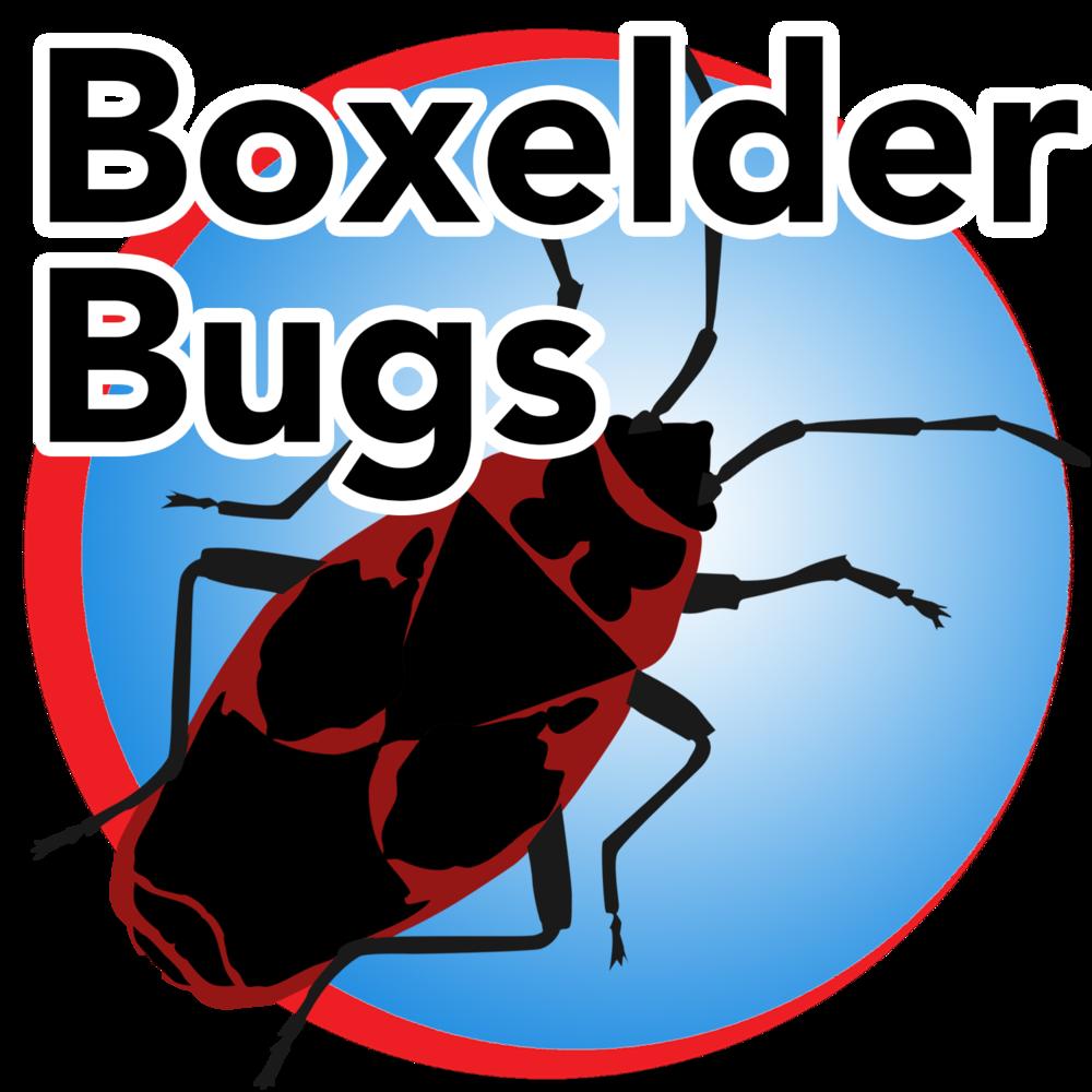 boxelder bug blue buttom.png