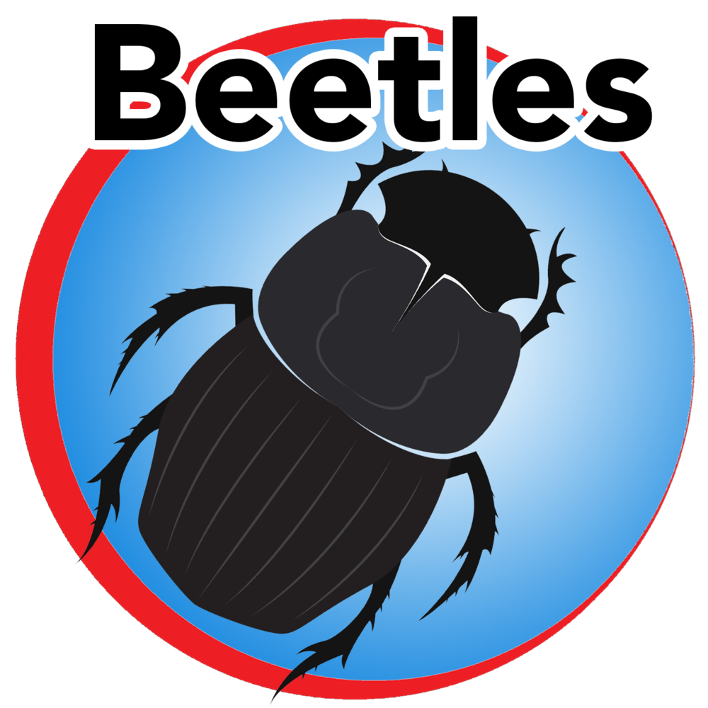 beetles blue buttom.png