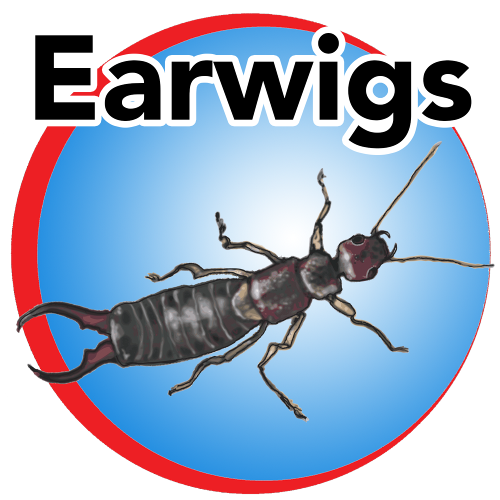 earwigs blue buttom.png