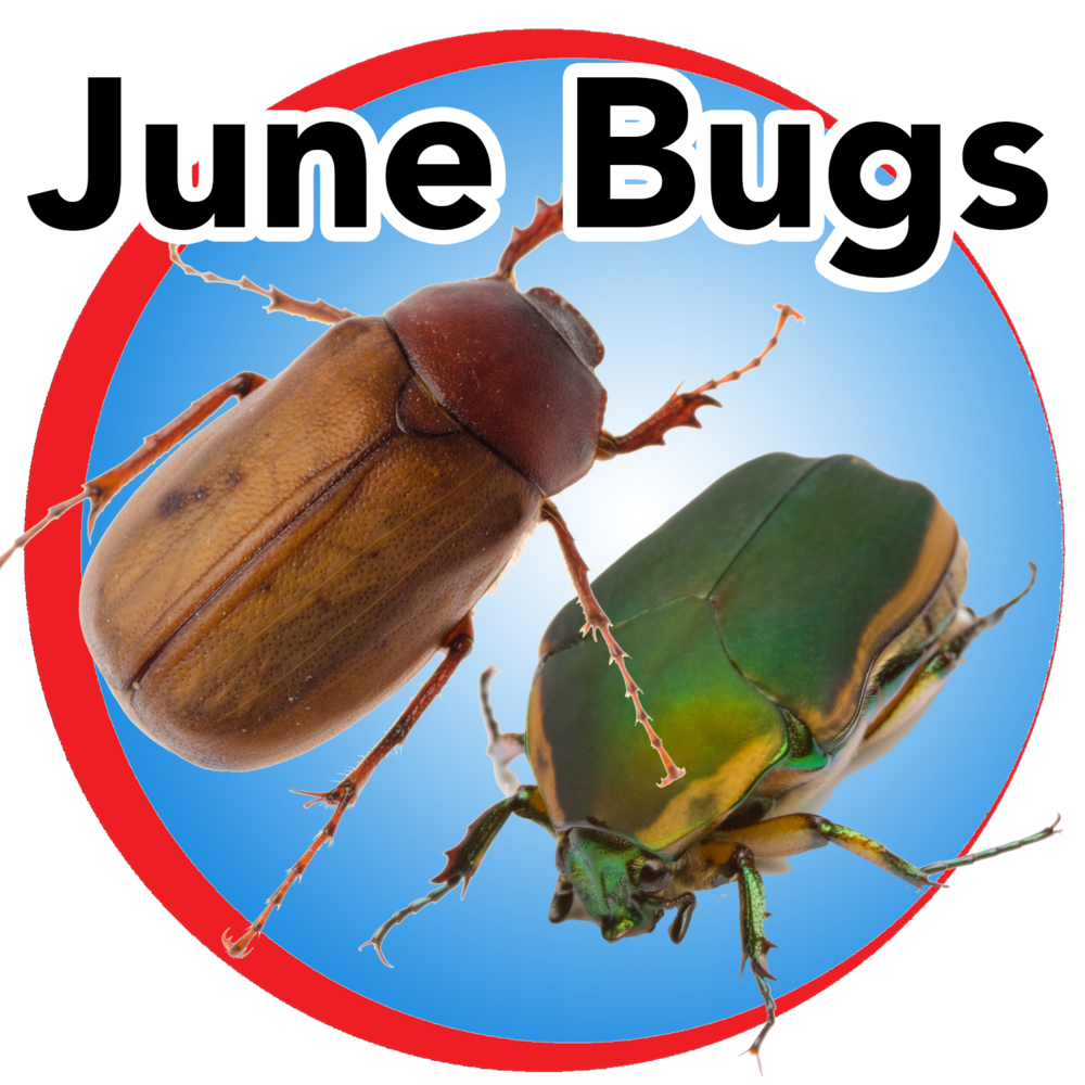 june bugs blue buttom.png