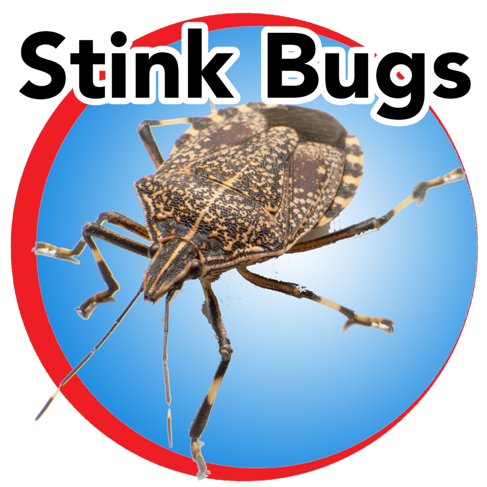stink bugs blue buttom.png