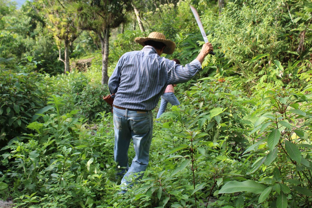 Joaquín wielding his machete - photo by Bailey McWilliams