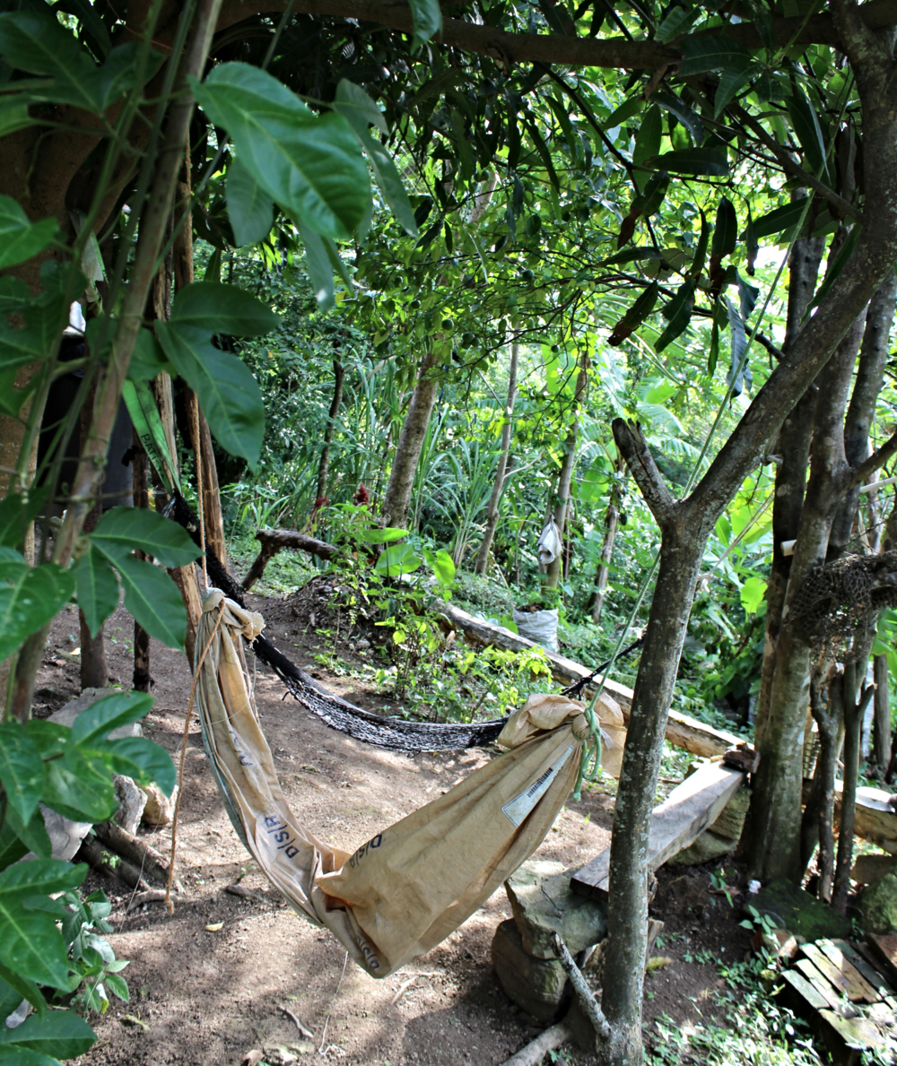 An inviting hammock up on the farm - photo by Bailey McWilliams