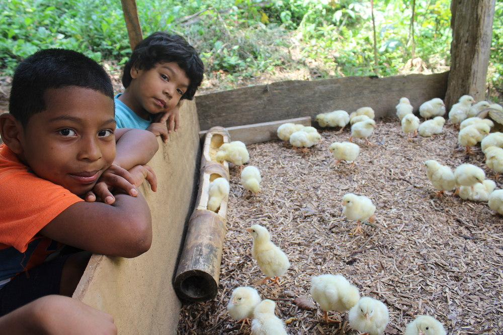 Grandchildren José + Andres visit newly hatched chicks - photo by Bailey McWilliams