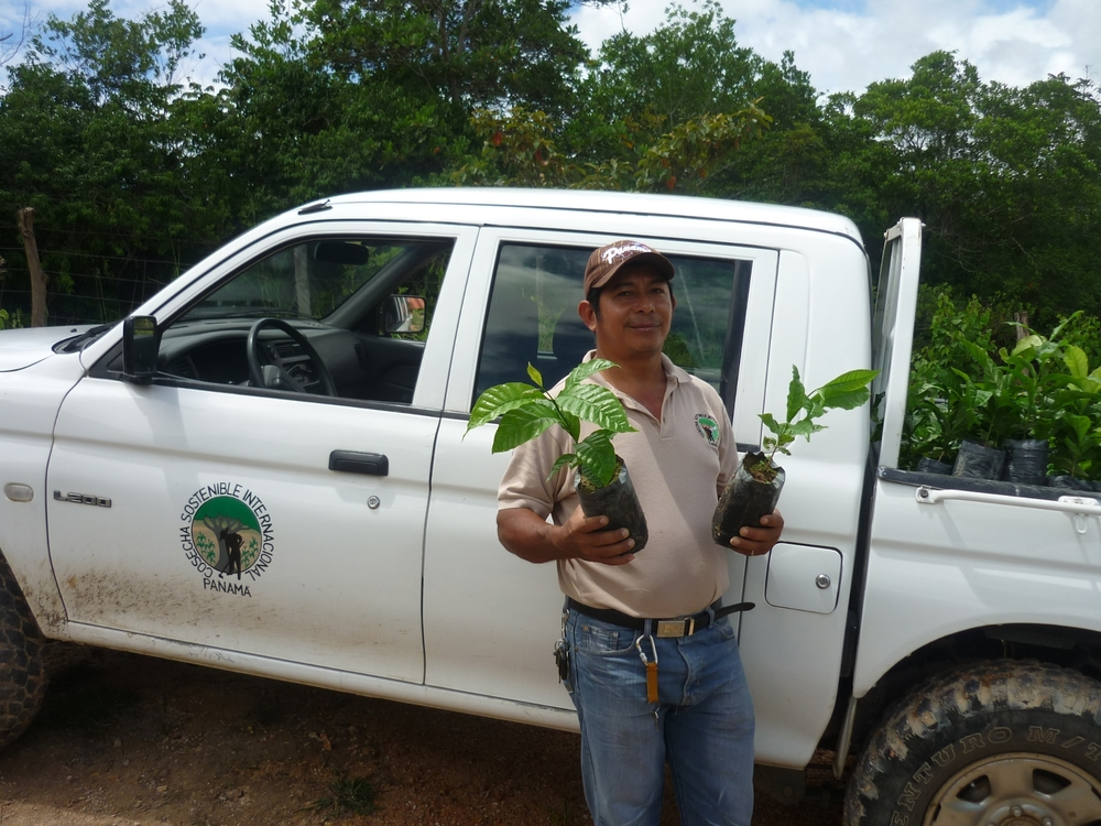Mariano moving trees for reforestation in Paguá, Panama. in Paguá, Panama.