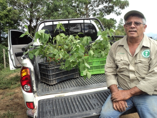 Field Trainer Jonatan Reyes has been encouraging farmers to use tatascán saplings in the last couple years. - photo by Jacobo Sauzo