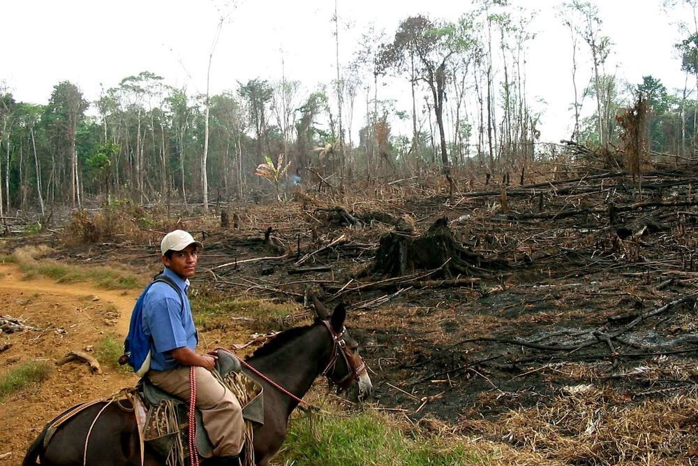Unsustainable farming leads to deforestation, which contributes to the climate crisis.
