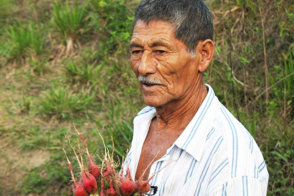 Don Cheyo grew up practicing slash-and-burn farming. With our help, he's done a total 180.