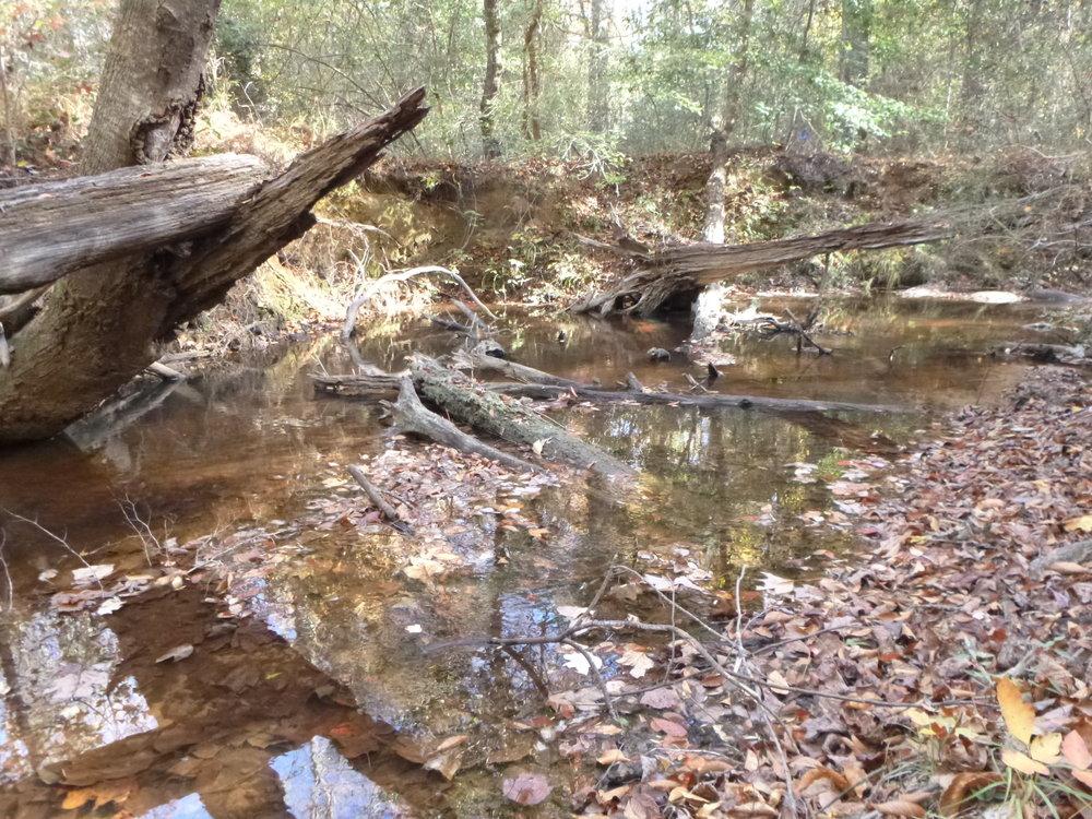 5.   Mayfield Creek, Moundville, AL