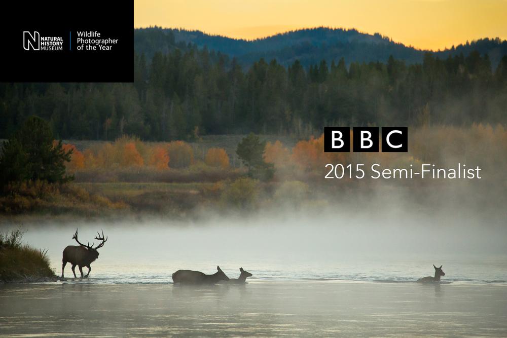 Elk in Grand Teton.jpg