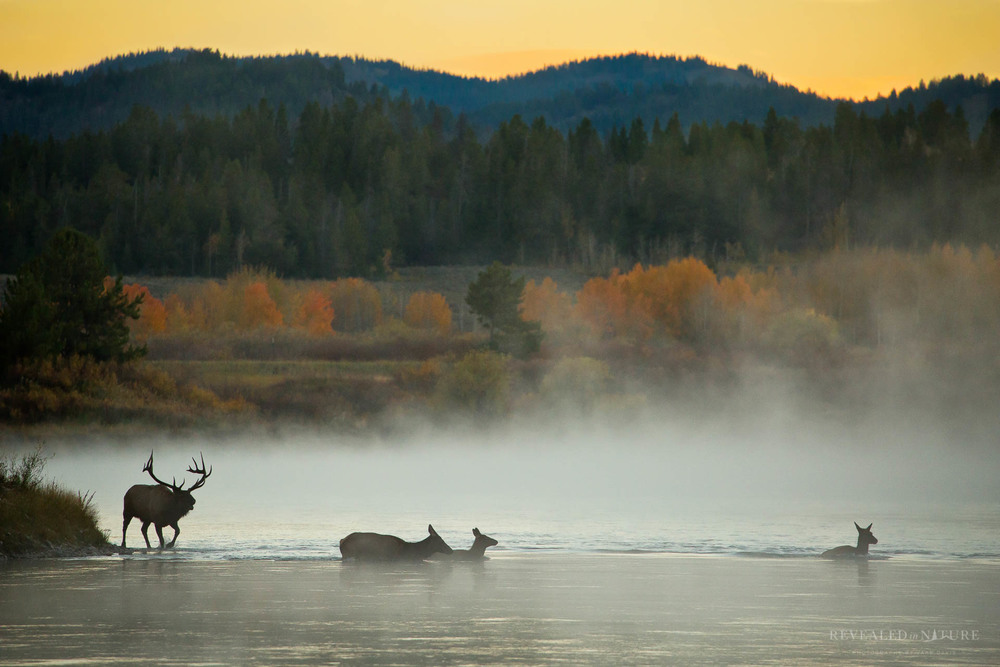 Elk Photography