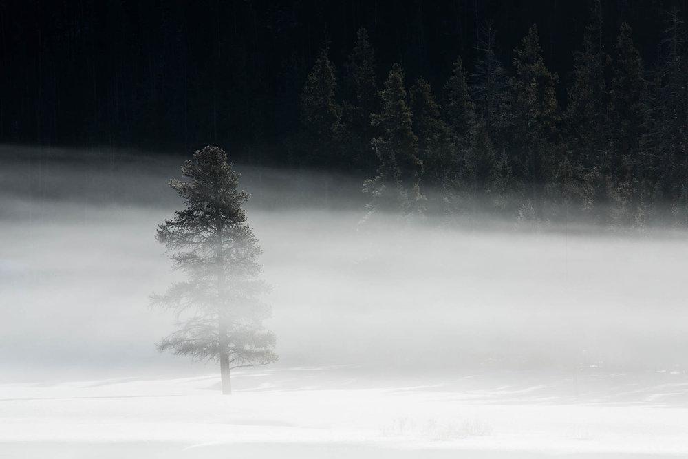 Black and White Yellowstone Photo
