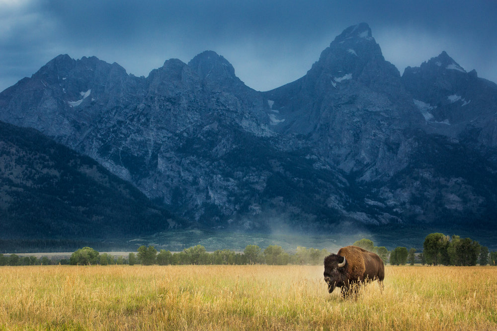 Private Yellowstone Tours