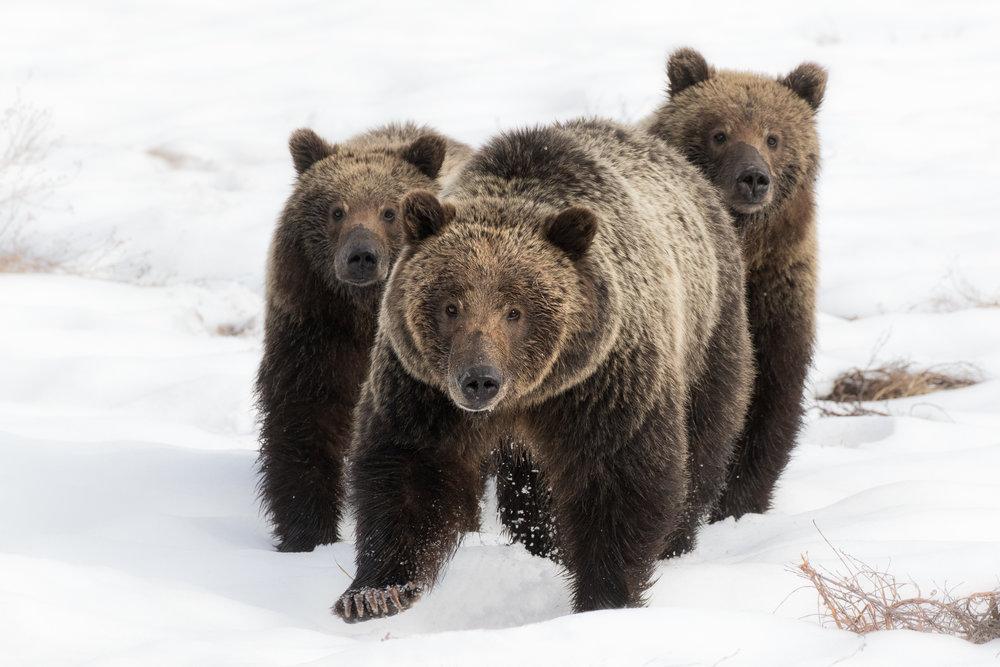 610&cubs.jpg