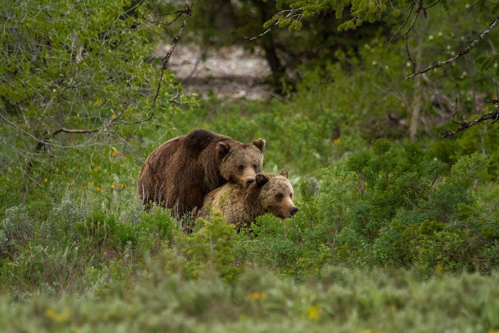 Bears-7.jpg