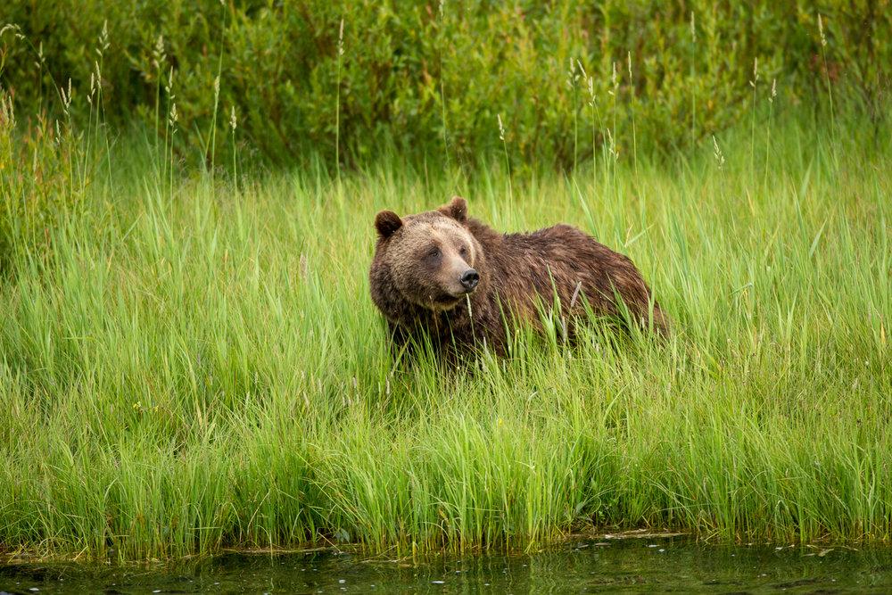 Bears-9.jpg