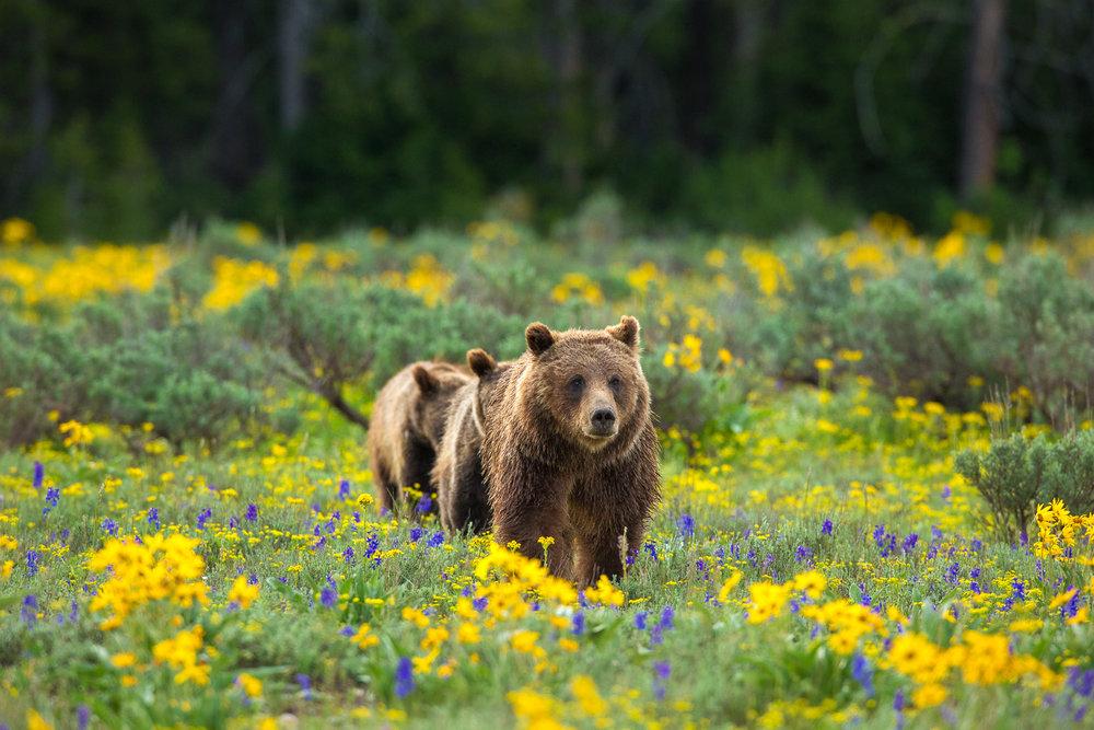 Bears-11.jpg