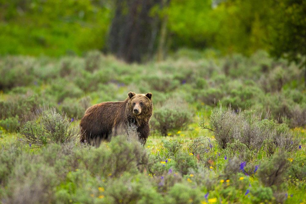 Bears-12.jpg