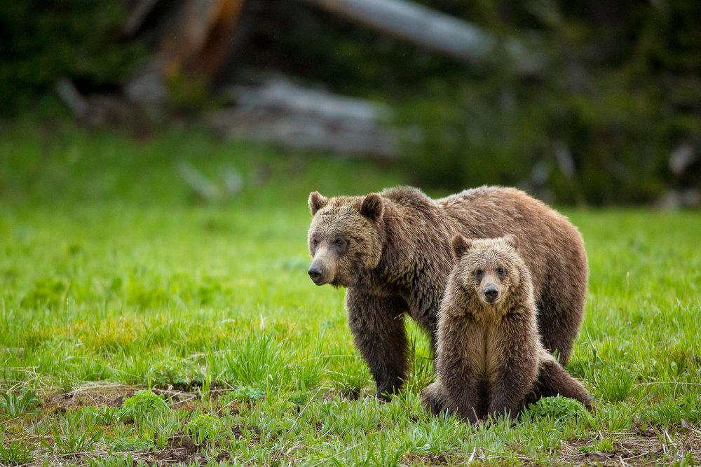 Bears-14.jpg