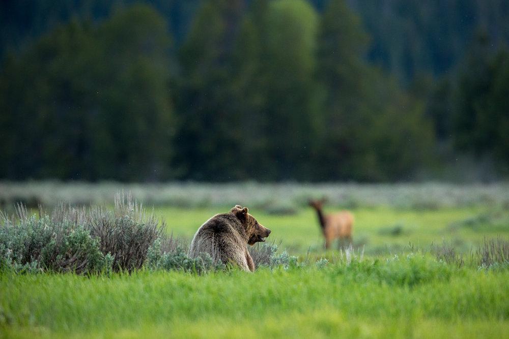 Bears-16.jpg