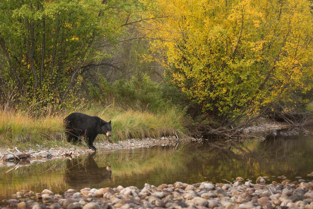 Bears-21.jpg