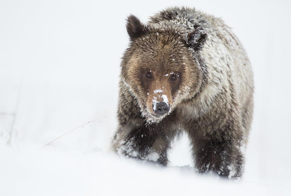 Bears-23.jpg