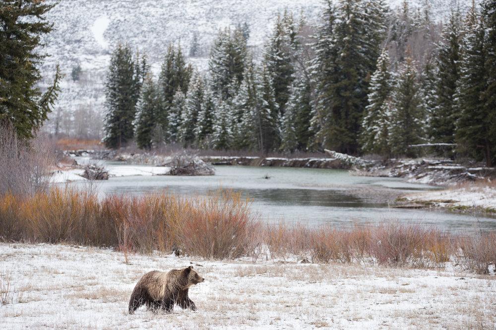 Bears-25.jpg