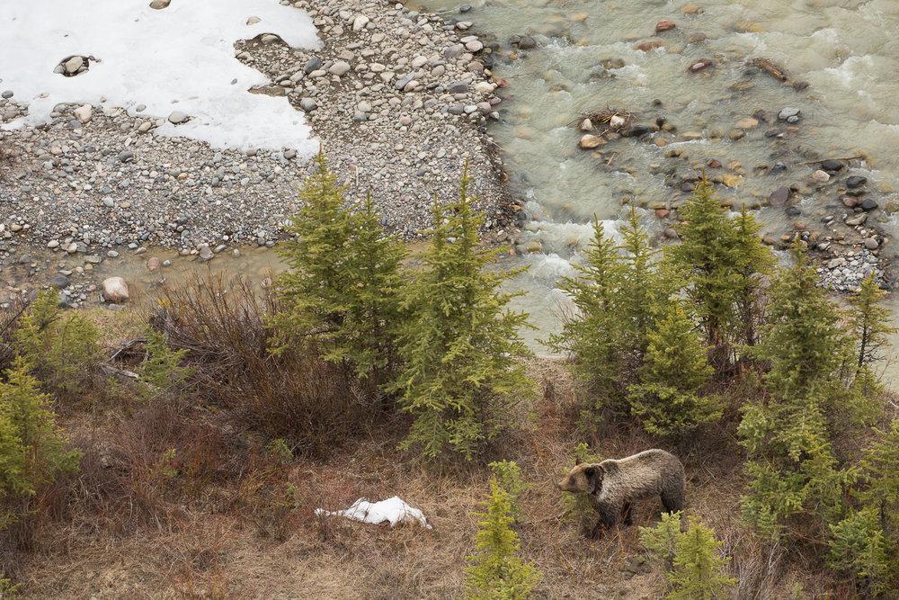 Bears-29.jpg