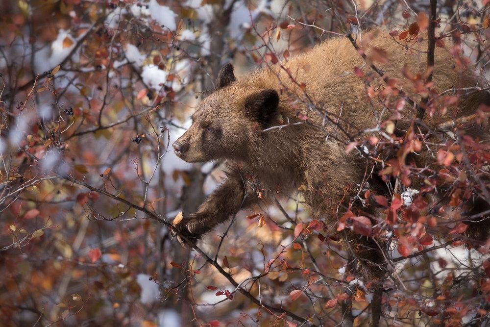 Bears-33.jpg