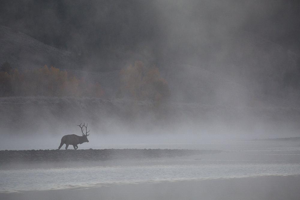 Wildlife-6.jpg