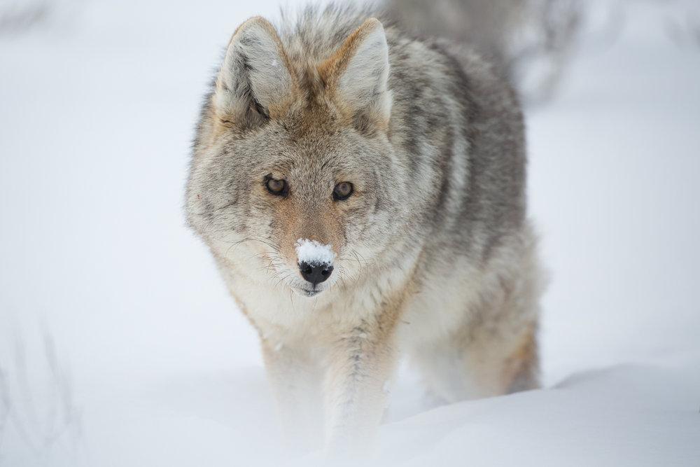 Wildlife-20.jpg