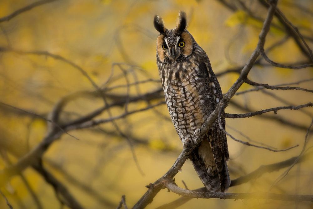 Wildlife-28.jpg