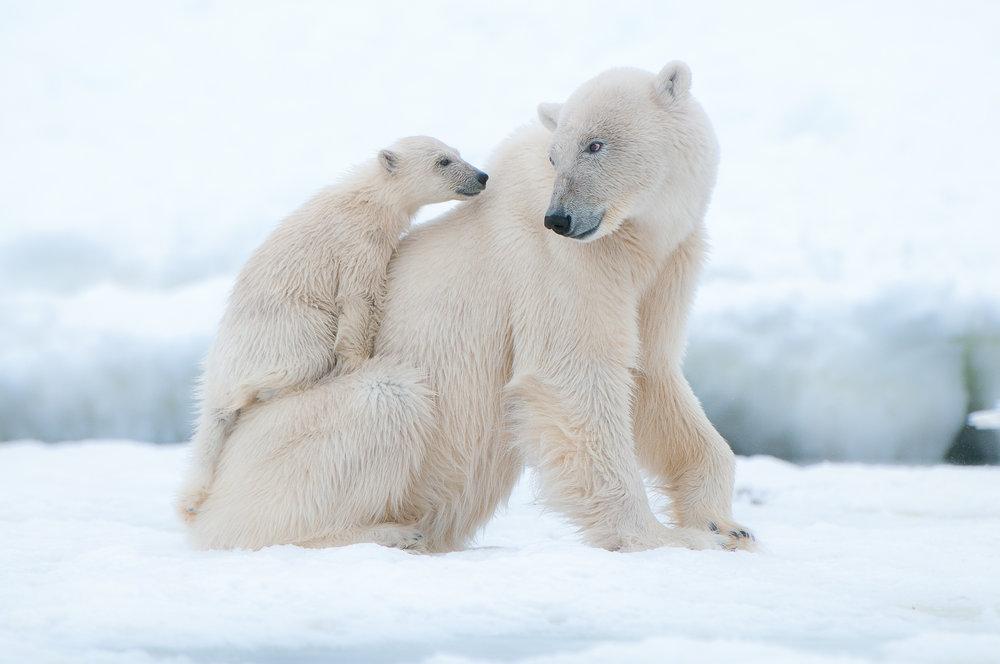 Svalbard-2.jpg