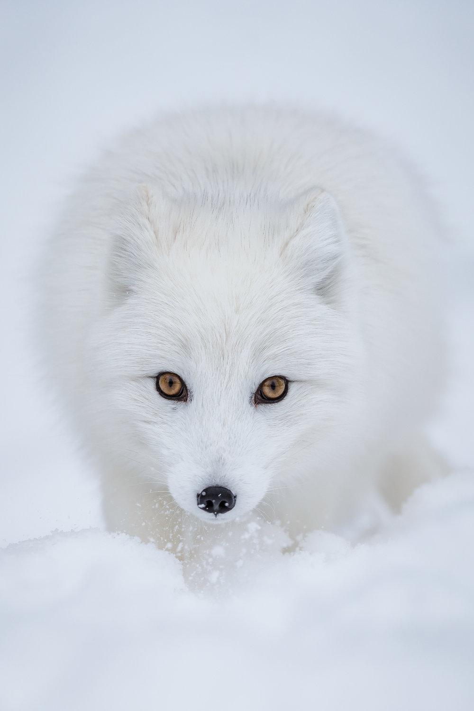 Svalbard-4.jpg