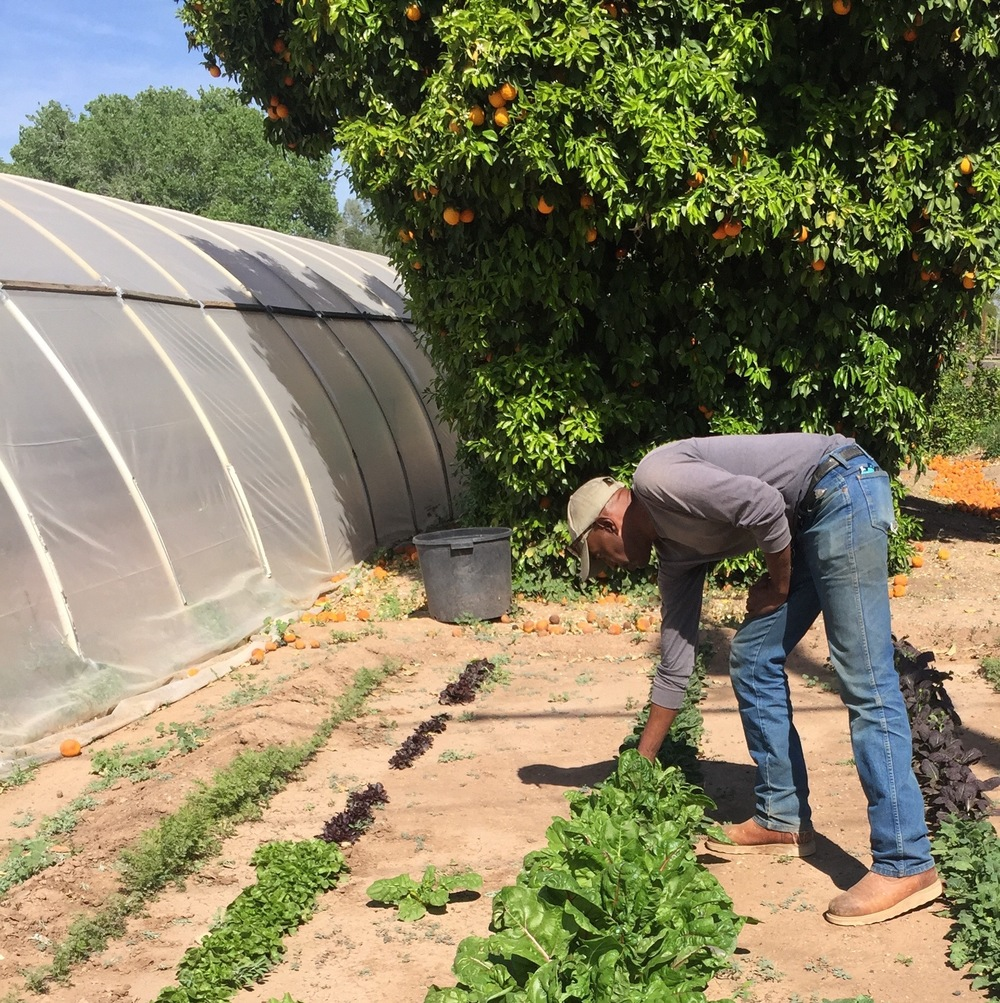 Dewayne in the garden at his Arizona herb farm.