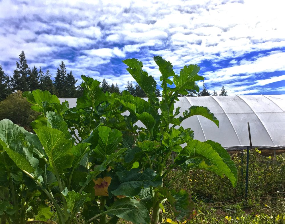 Lesedi Farm in the Pacific Northwest