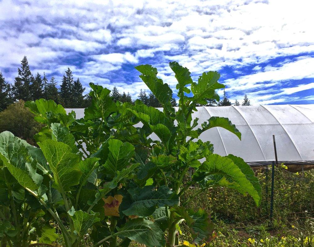 Lesedi Farm in the Pacific Northwest