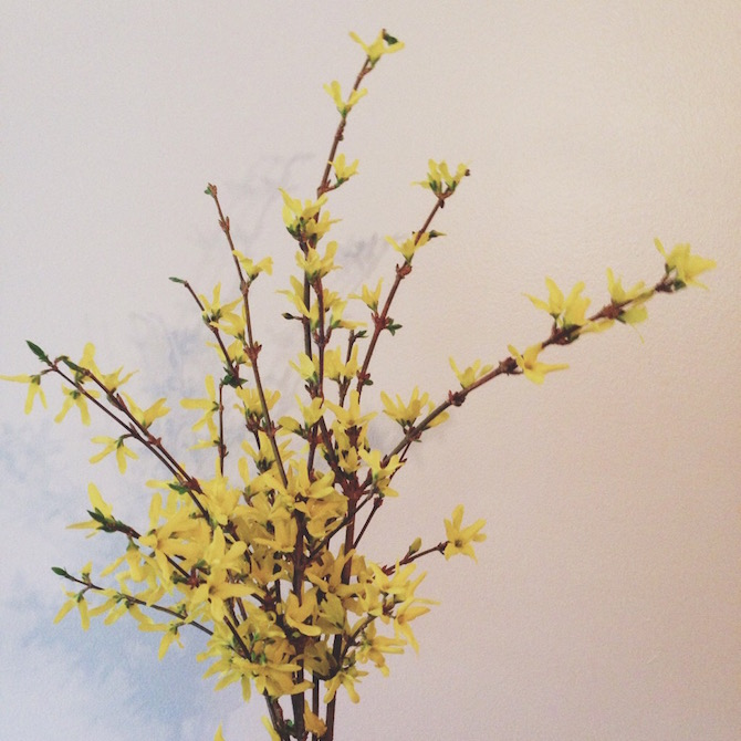 Give me all the forsythia. And the daffodils, too.