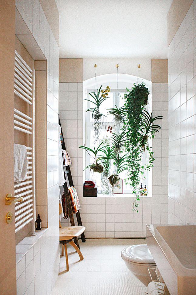 Window + plants