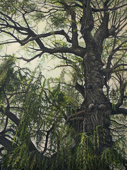Willow Tree (2014)