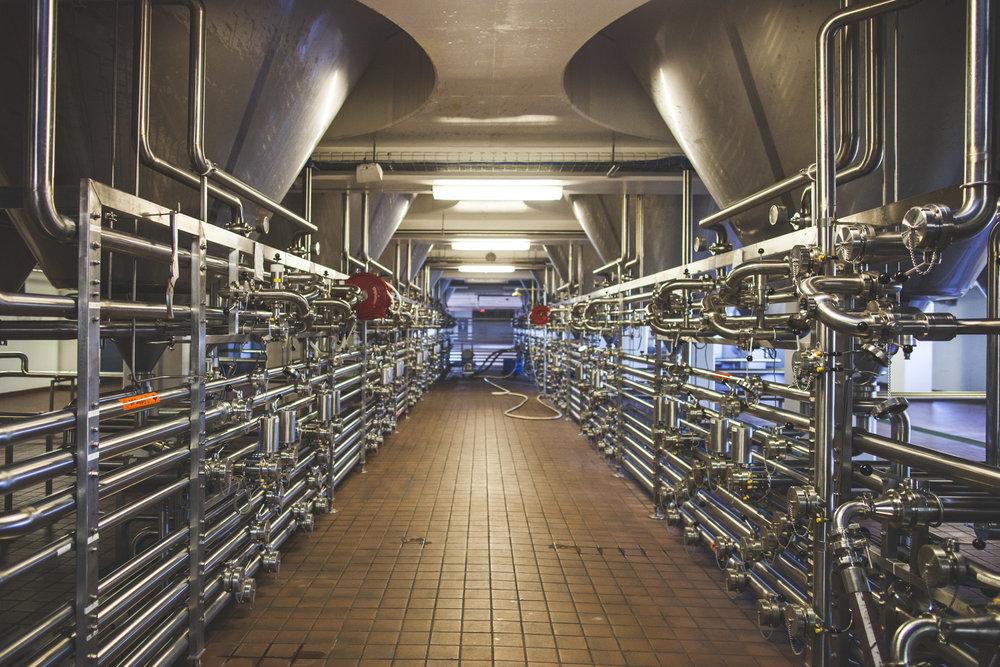 Below the 800 barrel fermentors.