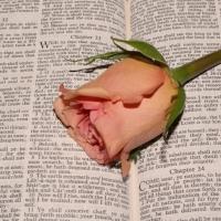 bible rose.jpg